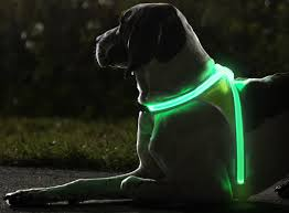 cycling jacket with lights amazon com noxgear lighthound multicolor led illuminated