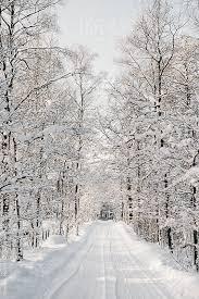 snowy tree lined winter road by stephen morris stocksy united