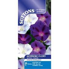 Morning Glory Climbing Plant - morning glory seeds inkspots ipomoea seeds popular flower