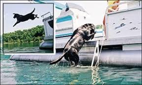 dog ladder for pontoon boat google search tom pinterest