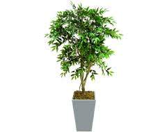 artificial trees topiary and outdoor plants from evergreen direct
