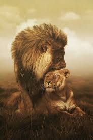 best 25 lion and lioness ideas on pinterest lion couple lion