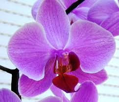 Orchid Flower Pic - download orchide flower solidaria garden