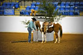 great american trail horses hit obstacle course before auction