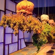 san francisco flower u0026 garden show