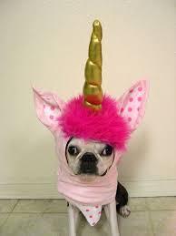 Funny Dog Costumes Halloween 86 Dog Costumes Halloween Images Animals