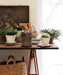 some great ideas on how to decorate your home with plants