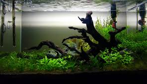 amazon clearwater biotope amazon blackwater biotope pinterest