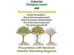 all about trees changing leaves and photosynthesis presentation