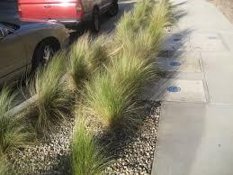 ornamental grasses the smarter gardener