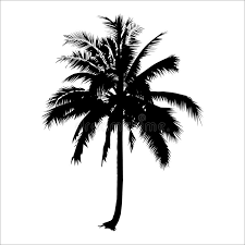 silhouette coconut tree vector logo design plant stock