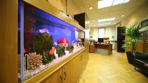Fish Tank Reception Desk Fishes In Aquarium In Light Small Work Room With Modern Leather