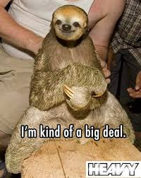 The Sloth Meme - the best of sloth memes 16 pics