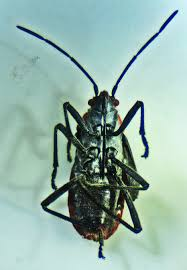 Kitchen Cabinet Bugs Seed Bug In Commercial Kitchen Pantry Round Rock Texas Bugs In