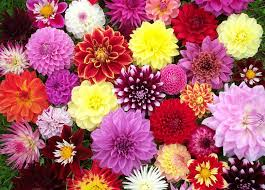 beautiful flower images 10 most beautiful flowers in the world newswatchngr