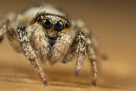 Cute Spider Meme - cute jumping spider 4 by alliec on deviantart