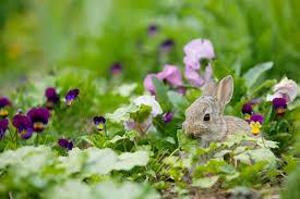 rabbit garden pondermom archive garden tales poetry and verse