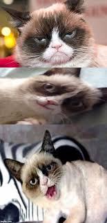 Cat Meme Maker - awesome 20 grumpy cat meme generator wallpaper site wallpaper site