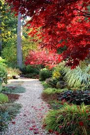 Tall Grass Landscaping by Japanese Maple Ideas Landscape Contemporary With Tall Grass