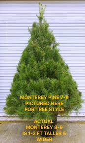 store adopt a christmas tree