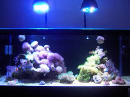 t5 lighting fixtures for aquariums lighting a 20 gallon long lighting forum nano reef com community