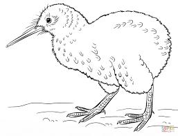 kiwi bird coloring page eson me