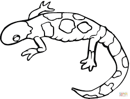 colorful gecko coloring page free printable coloring pages