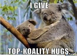koala hugs animal and funny animal