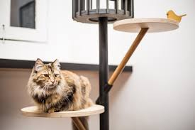 100 cat furniture 6 unique modern cat trees to spruce up