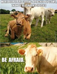 Moo Meme - moo memes best collection of funny moo pictures