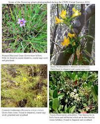grassland native plants cnpa study of bluffs preserve