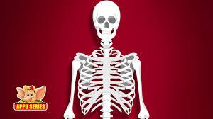 Halloween Skeleton Names Learn Human Body Skeleton System Youtube