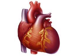 Anatomy Of Human Heart Pdf Heart Disease Switzerland Pdf Ppt Case Reports Symptoms