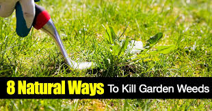 garden weeds 8 ways on how to kill weeds naturally
