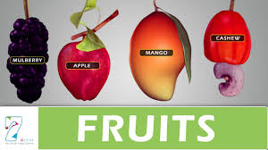 fruits youtube