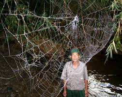 a halloween roundup featuring recent articles on spiders bats and