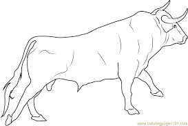 coloring page bull coloring pages page bull coloring pages bull