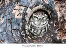 17 best reference images on owl trees and barn