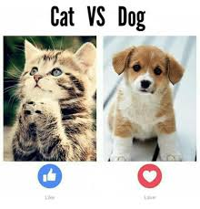 Dog Cat Meme - cat vs dog like love meme on me me