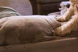 How To Clean Linen Sofa How To Clean Urine Out Of Couch Cushions Hunker