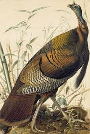 just in time for thanksgiving a new audubon exhibit with the