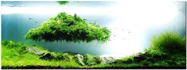 japanese aquarium japanese aquarium design