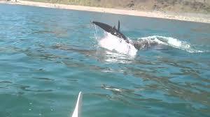dolphins killiney bay dublin ireland march 26th 2012 3 11pm
