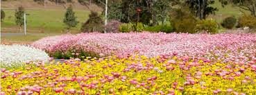 Mt Annan Botanical Garden Free Guided Walk The Australian Botanic Garden Mt Annan