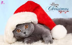 Cute Wallpapers For Kids Cat With Santa Cap For Kids Merry Christmas And Happy New Year