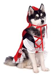 top 10 trending dog halloween costumes for 2015 dogtime