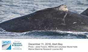 Whaling Meme - humpback whales marine education and research society
