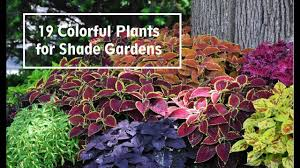 100 english garden plants for shade information for