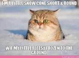 Grumpy Cat Snow Meme - 87 best weather memes and activities images on pinterest ha ha