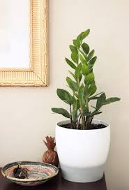 140 best house plants for low light images on pinterest indoor